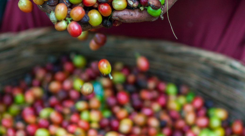 coffee pickers