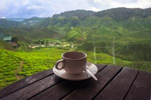 Steep Tea and Coffee